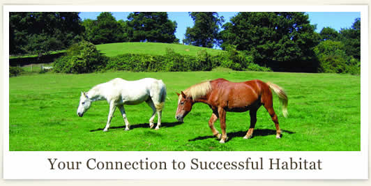 Your Connection to Successful Habitat
